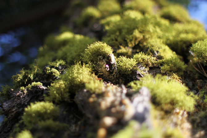 mossy greens
